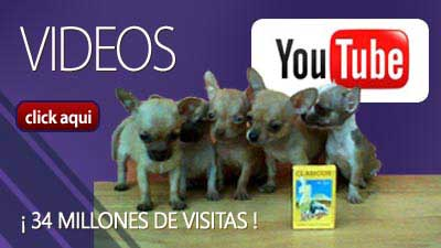 Galeria-de-Videos-de-Youtube